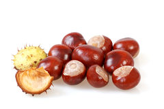 Chestnut with crust on a white Stock Photos