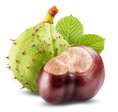 Chestnut. With crust on a white background royalty free stock photo