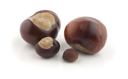 Chestnut with crust Royalty Free Stock Image