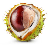 Chestnut Royalty Free Stock Photos