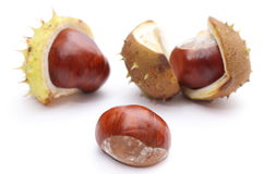Chestnut with crust on a white background Royalty Free Stock Image
