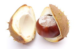 Chestnut with crust on a white background Royalty Free Stock Photo