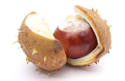 Chestnut with crust on a white background Stock Photos
