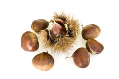 Chestnut Cupule Royalty Free Stock Photo