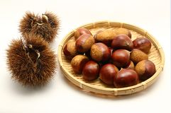 Chestnut. Curly and brown s Stock Photo