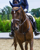 Chestnut dressage horse and girl at show jumping competition, waiting for her turn. Equestrian sport background. Chestnut horse portrait during dressage Stock Photos