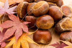Chestnut and dried maple leave Royalty Free Stock Images