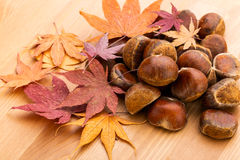 Chestnut and dried maple leave Stock Photos