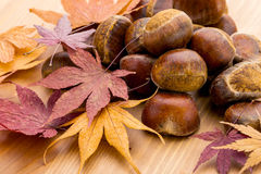 Chestnut and dry maple leave Stock Photo