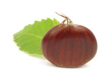Chestnut edible nuts on white Stock Images