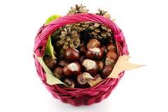 Chestnut fall scene Royalty Free Stock Photo
