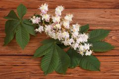 Chestnut flowers with green leaves on brown wooden Royalty Free Stock Image