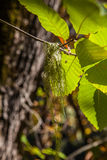 Chestnut forest and leaves Royalty Free Stock Photography