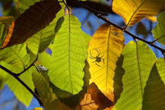 Chestnut forest and leaves Royalty Free Stock Photo