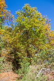 Chestnut forest and path Royalty Free Stock Photography