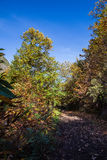 Chestnut forest and path Royalty Free Stock Photo