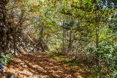 Chestnut forest and path Stock Image