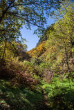 Chestnut forest and path Stock Photo