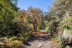 Chestnut forest and path Royalty Free Stock Image