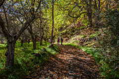 Chestnut forest and path Stock Photos