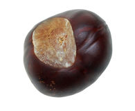 Chestnut fruit Stock Photo