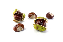 Chestnut. Fruit is isolated on a white background stock photos