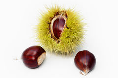 Chestnut Fruit and Seeds. Sweet chestnut fruit half open and nuts on white background stock images
