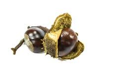 Chestnut fruits Royalty Free Stock Photo