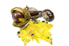 Chestnut fruits and yellow leaf Royalty Free Stock Photo