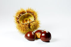 Chestnut and grape Stock Photography