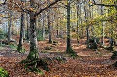 The chestnut grove Royalty Free Stock Photos