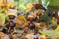 Chestnut guys Stock Photos