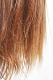 Chestnut hair ends on white Royalty Free Stock Images