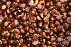 Chestnut Harvest Royalty Free Stock Image