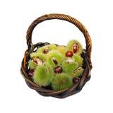 Chestnut Harvest Royalty Free Stock Photography