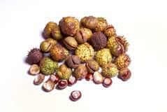 Chestnut harvest Royalty Free Stock Images