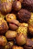 Chestnut harvest Royalty Free Stock Image