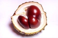 Chestnut harvest Stock Photos