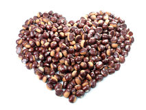 Chestnut Heart Stock Image