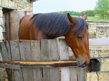Chestnut horse Stock Photos