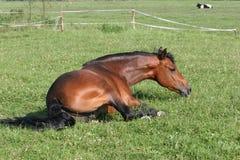 chestnut horse Royaltyfri Fotografi