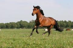 chestnut horse Arkivfoton