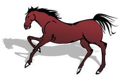 Chestnut horse Stock Photos