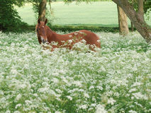 Horse Standing In Wild Flowers Stock Photo
