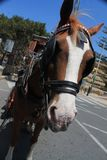 Chestnut Horse and Cart, traditional transport for Mdina, Malta.  Royalty Free Stock Image