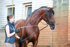 Chestnut horse enjoying of cooling down in the summer shower. Young pretty teenage girl equestrian washing her chestnut horse in cool shower. Vibrant Royalty Free Stock Photography