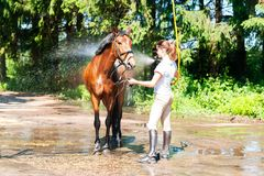 Chestnut horse enjoying of cooling down in the summer shower. Young teenage girl equestrian washing her chestnut horse in shower. Vibrant multicolored summertime Royalty Free Stock Image