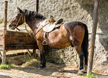 Chestnut horse are fed hay, side view Stock Image