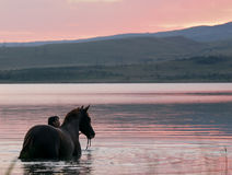 Chestnut horse and the girl in the water. Beautiful chestnut Russian Don gelding and the girl standing in the water at sunrise Stock Images