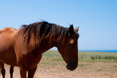 Chestnut horse grazing in a meadow Stock Image
